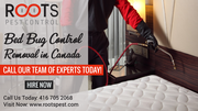 Bed Bug Control & Removal in Canada   Roots Pest Control
