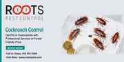 Cockroach Control Services in Canada   Roots Pest Control